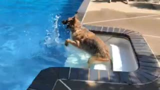 Brown german shepard pool splash stairs - Video