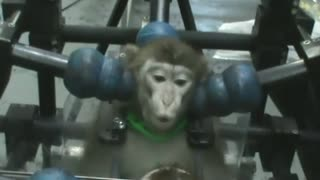 Chinese study shows monkeys can be taught to recognise themselves - Video