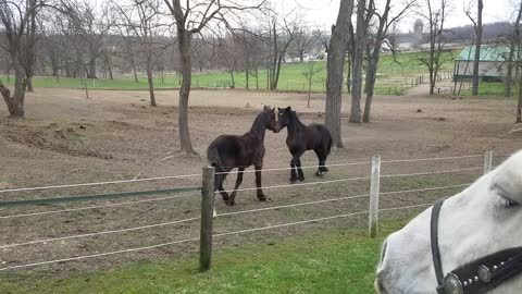 Rowdy foals playing