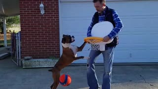 Boxer Loves to Play Basketball
