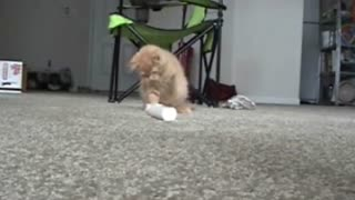 Kitten plays with electric toothbrush