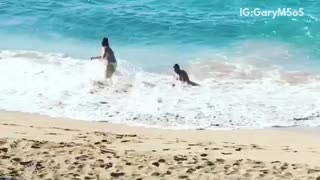 Shirtless man picks up white dog in ocean gets knocked down by wave - Video