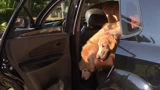 Dogs on Vacation - Video