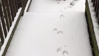 Boxer Dog Can't Handle His First Snow