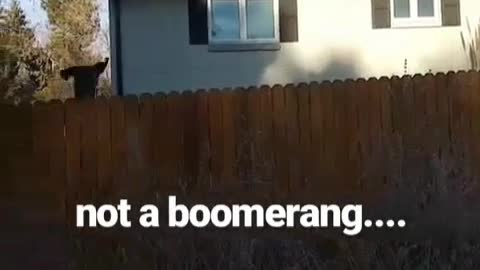 Jumping dogs perfectly resemble whack-a-mole game