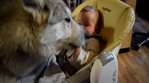 incredible concern from the Terrible wolf