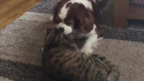 dog and cat cleaning each other