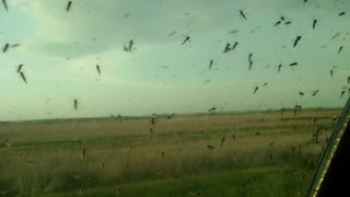 Millions of Mosquitoes - Alternate Angle - Video