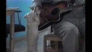 Little Dog Dances To Owner's Kitchen Guitar Playing