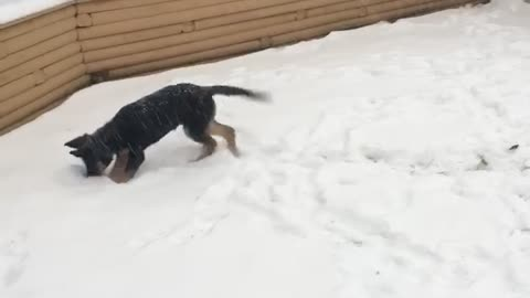 Puppies 1st snowstorm