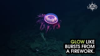 Check Out This Firework Jellyfish - Video