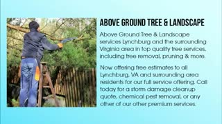 tree service timberlake - Video
