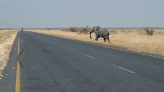 Female Elephant Stops Truck On Road