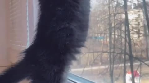 how does your kitten ask for a walk?