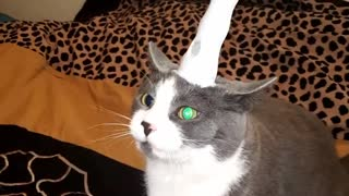 Cat not thrilled about becoming a unicorn - Video