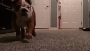 Adorable puppy attack in slow motion! - Video