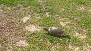 A Turtle Visitor - Video