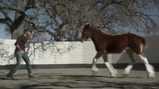 UNFORGETTABLE! EMOTIONAL RELATIONSHIP BETWEEN HORSE AND A HUMAN - Video