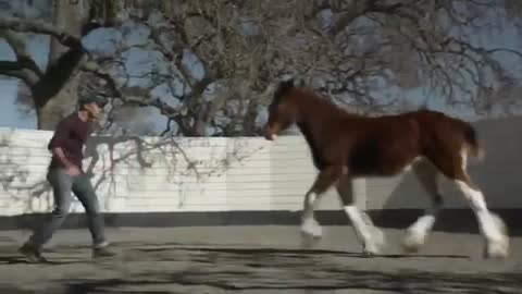UNFORGETTABLE! EMOTIONAL RELATIONSHIP BETWEEN HORSE AND A HUMAN