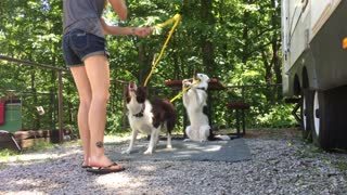 Dog helps owner turn jump rope for other dog!