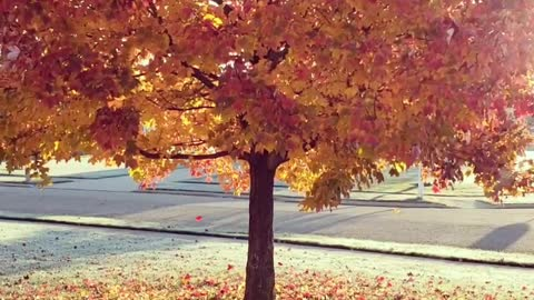 Beautiful Fall Leaves Falling