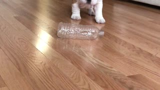 Cute Puppy Take On Water Bottle - Video