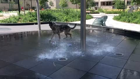 Dog is living for the water