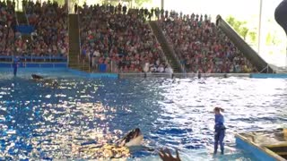 Shamu saying Hi - Video