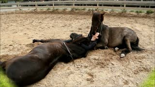 Tamed Horses Share Incredible Bond With Human Friend - Video