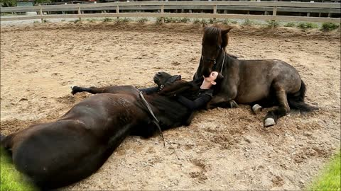 Tamed Horses Share Incredible Bond With Human Friend