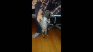 Funny Dancing Puppy  - Video