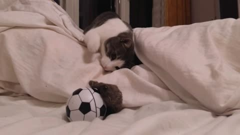 Miro the cat is nervous about his new toy