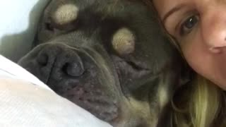 Pudge the pit is very crabby at 6am - Video