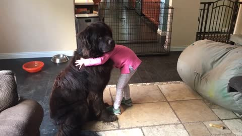 Newfoundland learns how to sit for hugs