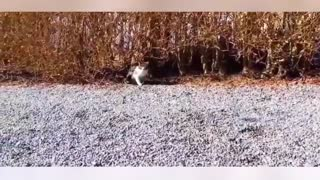 Cats vs Dogs dominate Compilation 2014 BEST - Video