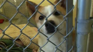 23 dogs bred for meat rescued from South Korea - Video