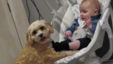 This baby cries in his rocker until the family dog helps push the swing!