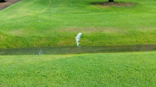 Lawn has sprung a leak! - Video