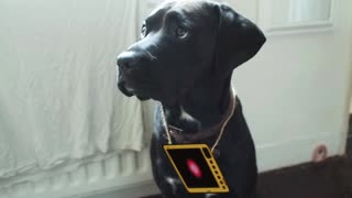 A talking dog? - Video