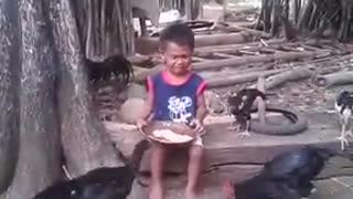 Boy and chicken fight - Video