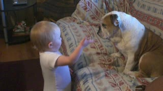 Baby Has Engrossing Conversation With Her Patient Bulldog   - Video