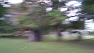 Dog misses ball catch and runs into tree
