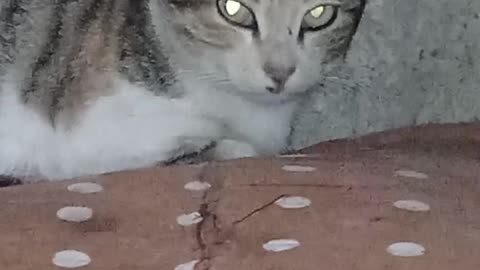 The cat's eyes changed color, due to the light