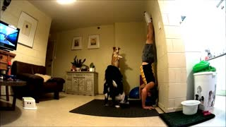 Dogs perform yoga exercise with owner - Video