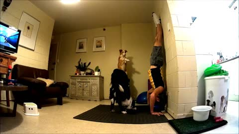 Dogs Practice Yoga With Owner And Help Him Stay Fit