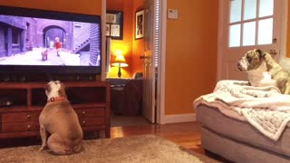 Bulldogs Have Amazing Reaction To Distressed Canine On TV - Video
