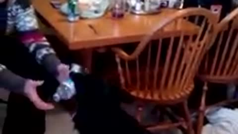 Dog Retrieving A Drink
