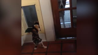 Boss Cat Pulls 'You Shall Not Pass' Attitude On Dog  - Video