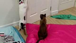 One Smart Cat - Video
