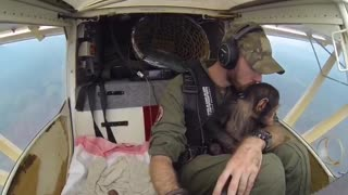 Chimpanzee Co-Pilots Flight Home